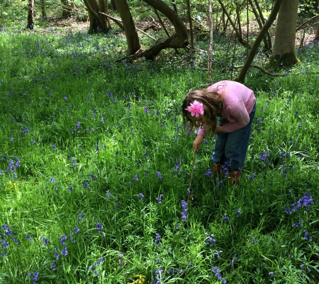Mia bluebell hunt
