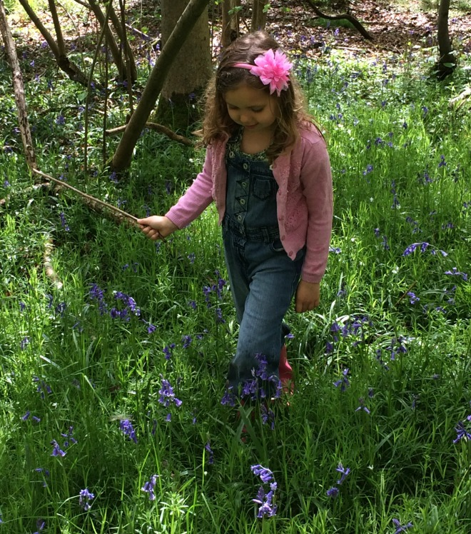 Oxfordshire Bluebell Wood