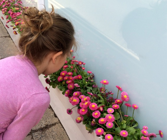 Mia and window box flowers