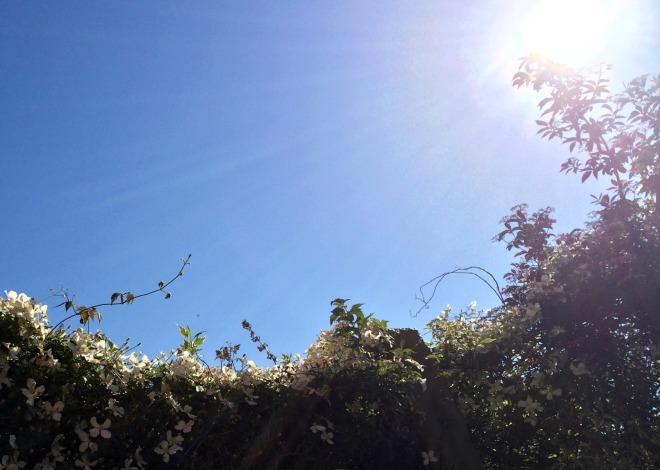 Woodbridge garden