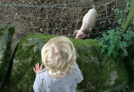 Joe and the piglet