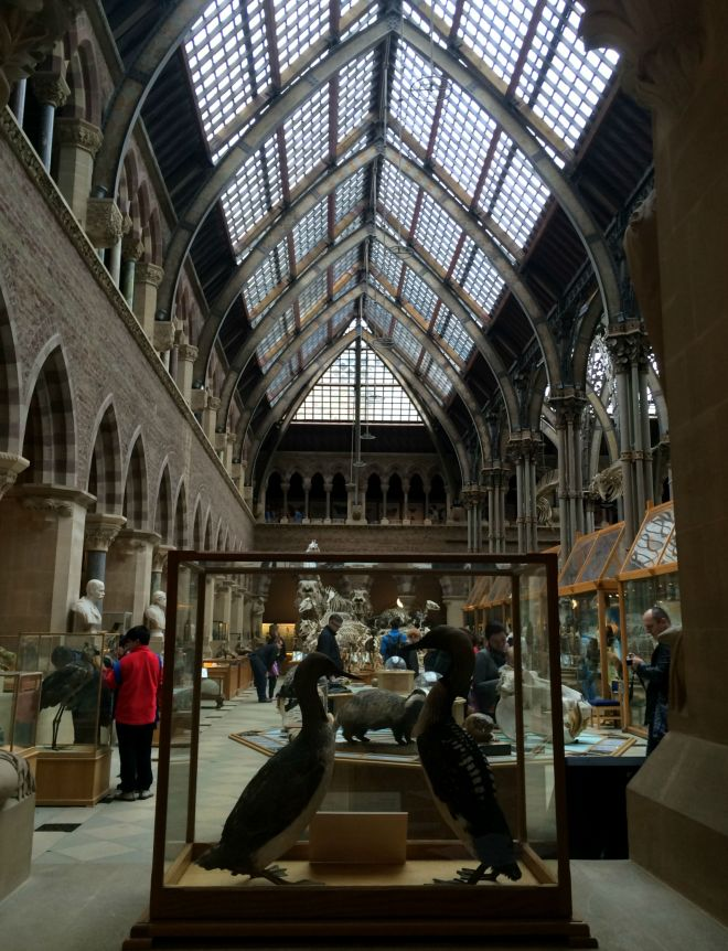 Pitt Rivers interior