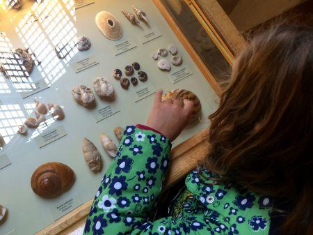 shell display