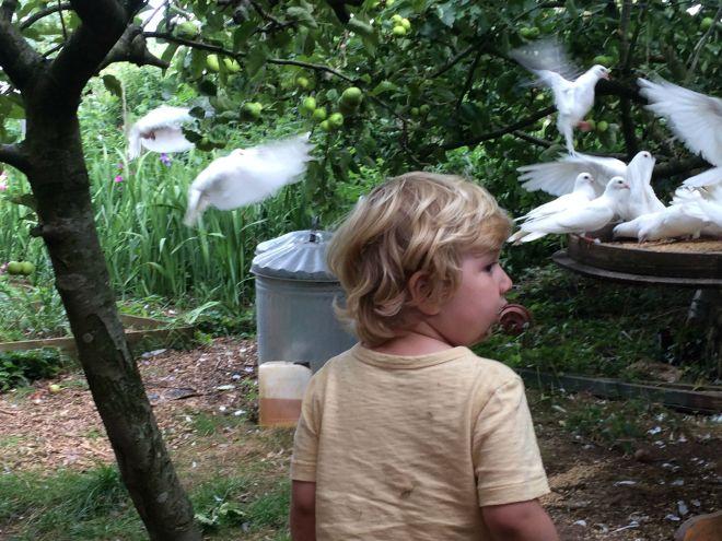 Joseph doves